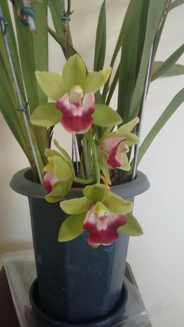 Amo minhas flores!