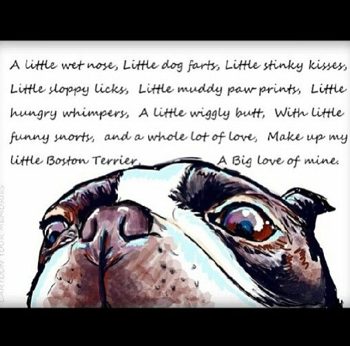 Anyone who has a Boston can agree with these things (: