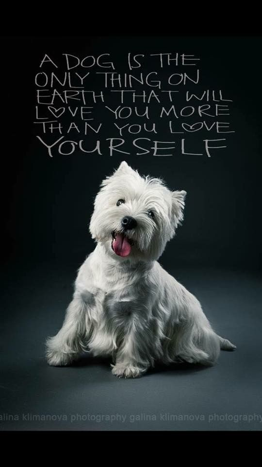 So true! Love this breed!