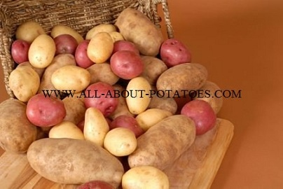 All about Potatoes  ~  Different types of potatoes and the best ways to cook them.