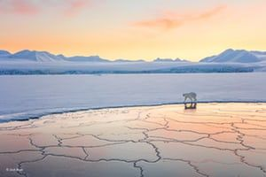 Land of snow and ice by Josh Anon, US'The Arctic is beautiful all year-round, but in the late winter, when temperatures reach -30C (-22F) and everything is white and the sun stays low on the horizon, it's stunning. Josh was on a boat in a fjord across from Longyearbyen, Svalbard, Norway, and encountered this polar bear walking along the edge of the ice. She was curious, walking past the boat twice – just long enough for Josh to take a shot with her white coat glowing in the setting sun…