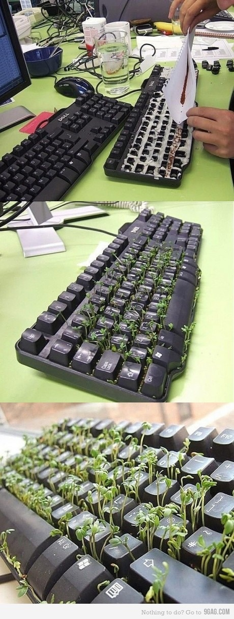 Turn an old keyboard into a grass/herb garden!