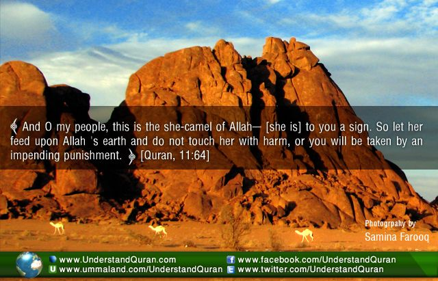 Miracle Stories: The She-Camel of Allah - Understand Quran Academy