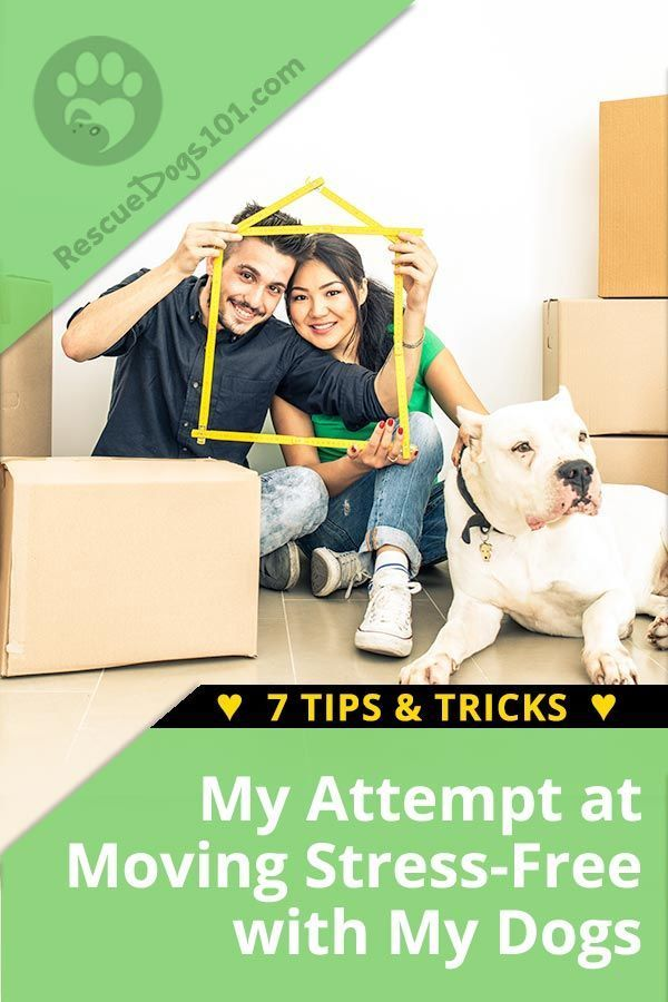 Moving With Dogs 7 Tips Tricks Training Your Dog Dog Care