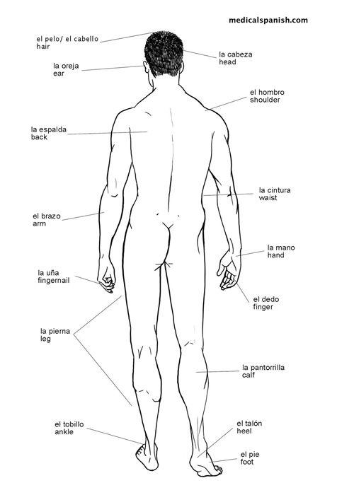 Que puede estar enfermo sobre la espalda entre las espátulas de la causa