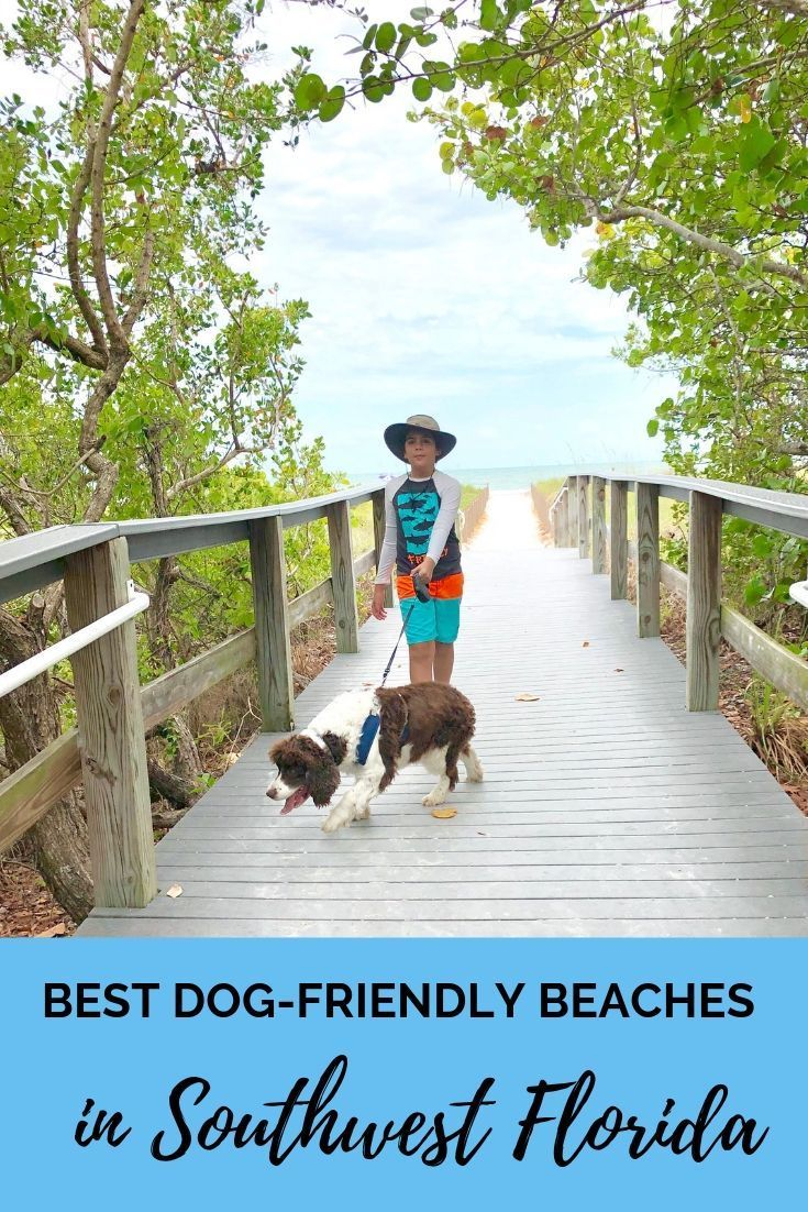 Best Dog Friendly Beaches In Sw Florida Dog Friendly Beach Dog Friendly Vacation Pet Friendly Beach
