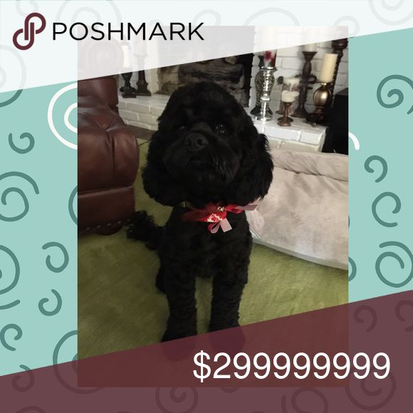 Meet Lincoln!!🐾🐾❤️❤️🐾🐾 Hi I'm Lincoln and I'm a Cockapoo!  🐾🐾🐾. I rescued my mom and dad in October 2016 when someone saw me on Facebook and told my mom about me. I'm a stinker sometimes and I'm pretty hard to train cuz I'm so smart. But I'm a lover and 💯% adorbs ‼️‼️‼️❤️❤️❤️.   Have fun shopping in Char's closet‼️🐾🐾🐾🐾💛💚💚💙💙💙💜💜💜❤️❤️❤️ Other