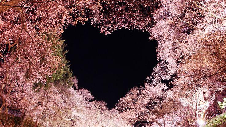 開花目前!全国桜の名所20選 国内旅行特集【トラベルコ】