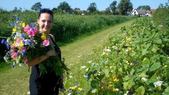 bloemenranden walcheren - Google zoeken