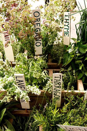 If you are thinking about having a garden, consider making it an edible garden to reap fresh herbs, fruits, and veggies.
