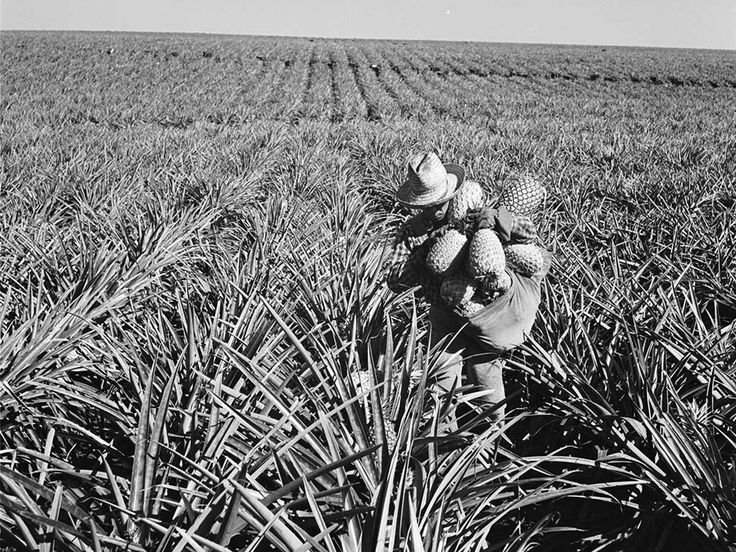 """In the late 1800s, sugar and later, pineapple plantations powered Hawaii's economy. James Dole turned Lanai into the world's leading exporter of pineapple, earning it the nickname """"Pineapple Island."""""""