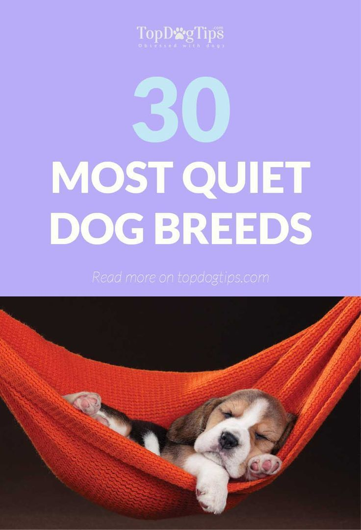 30 Most Quiet Dogs Best For Apartments Quiet Dog Breeds Dog Breeds Medium Dog Breeds
