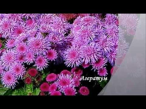 Какие семена цветов сеять в феврале - YouTube