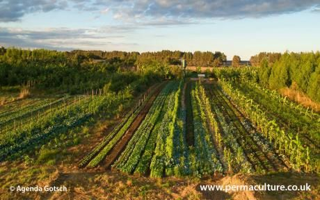 230 best regenerative agriculture permaculture images on pinterest published online for the first time patrick whitefields timely essay that made people wake up to the potential of permaculture food systems fandeluxe Image collections