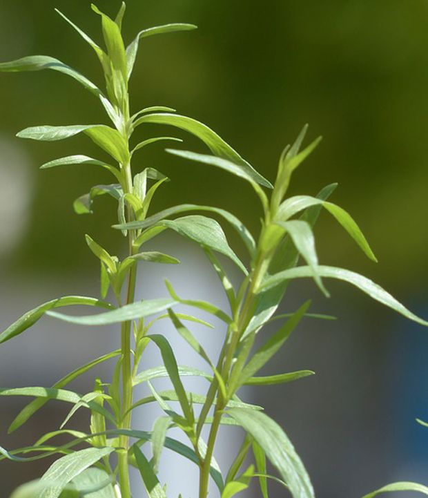 1015 best images about jardines y huertas on pinterest for Jardinera plantas aromaticas