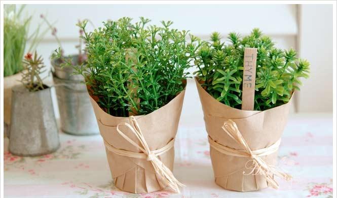 gift of herbs: Herbs, Green Pots, People, Herbal Gifts,  Flowerpot