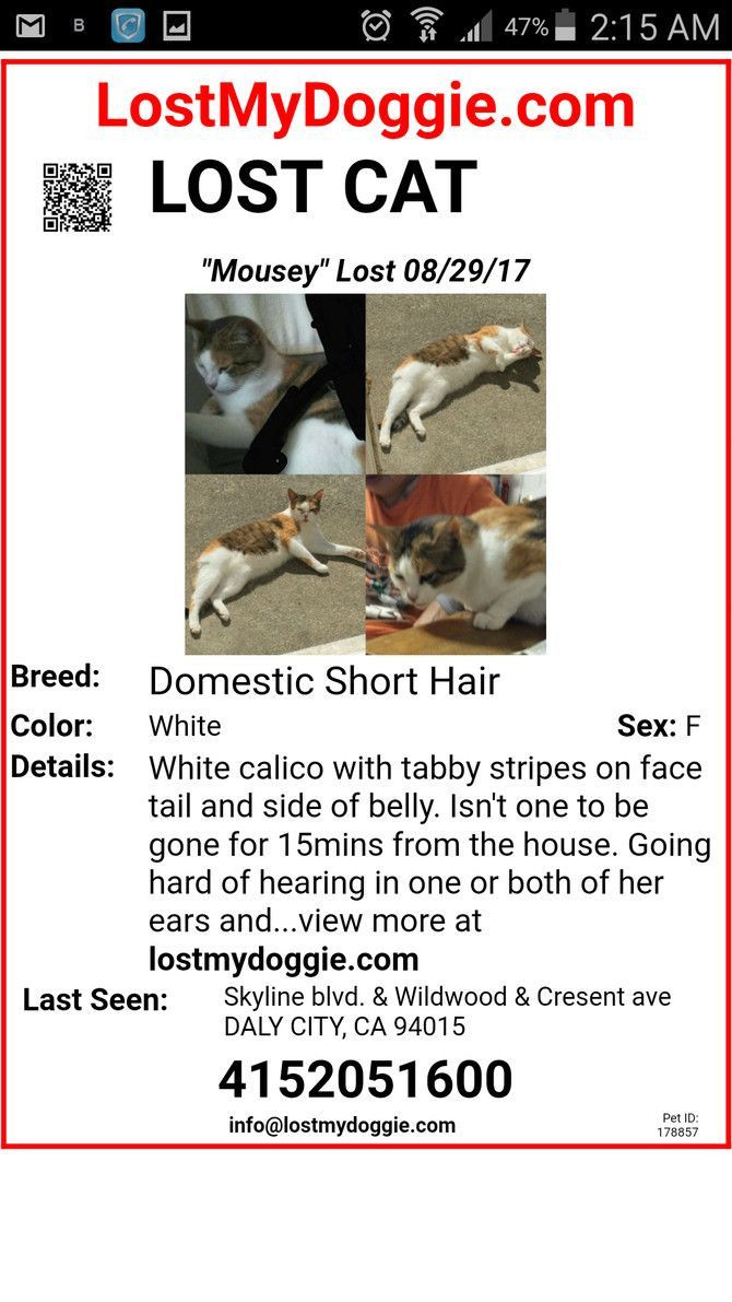 Lost Cat Poster Template In 2021 Poster Template Lost Cat Poster Missing Posters Lost and found poster template