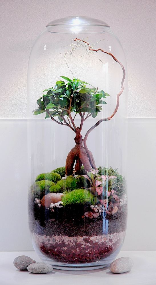 comment faire un terrarium humide en 8 tapes terraria plants and gardens. Black Bedroom Furniture Sets. Home Design Ideas