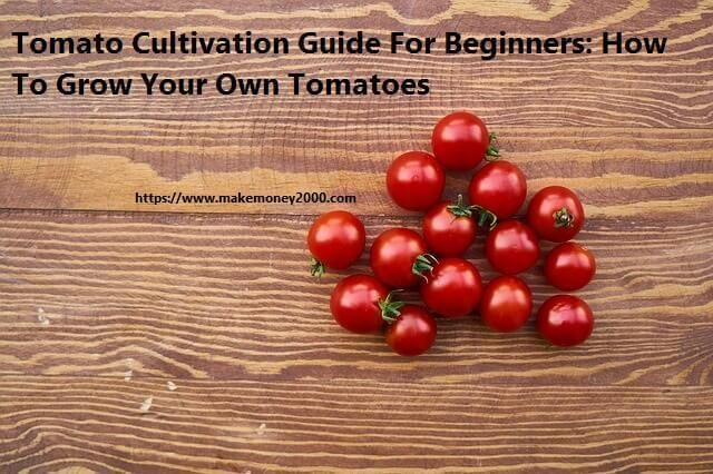 Tomato Cultivation Guide For Beginners: How To Grow Your Own Tomatoes #gardening #garden #DIY #home #flowers #roses #nature #landscaping #horticulture #growingrosesforbeginners