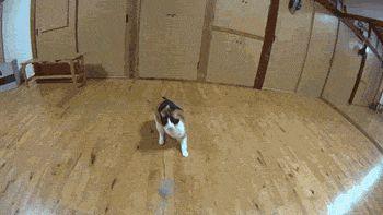 More GIFs http://catsdogsblog.com/