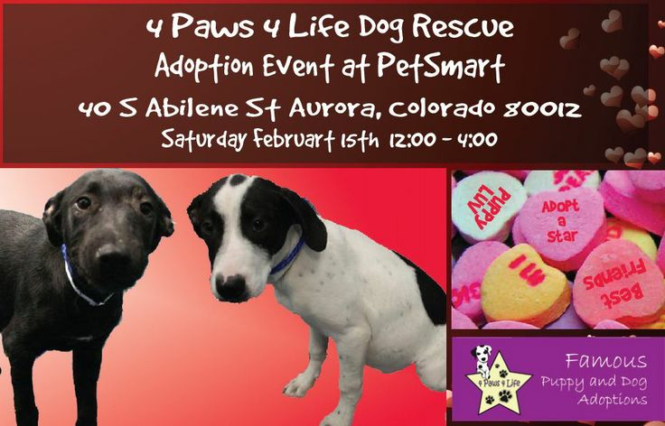 4 Paws 4 Life Dog Adoption Event At Petsmart In Aurora Dog Adoption Event Dog Adoption Dogs