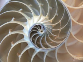 divine proportion found in nature