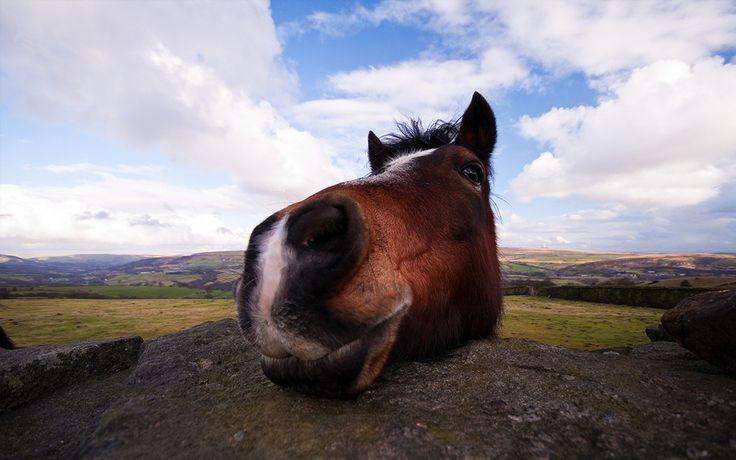 Beginner Basics: Horse Markings