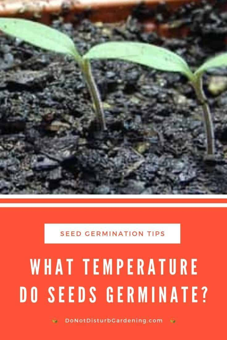 25+ What temperature does grass germinate ideas