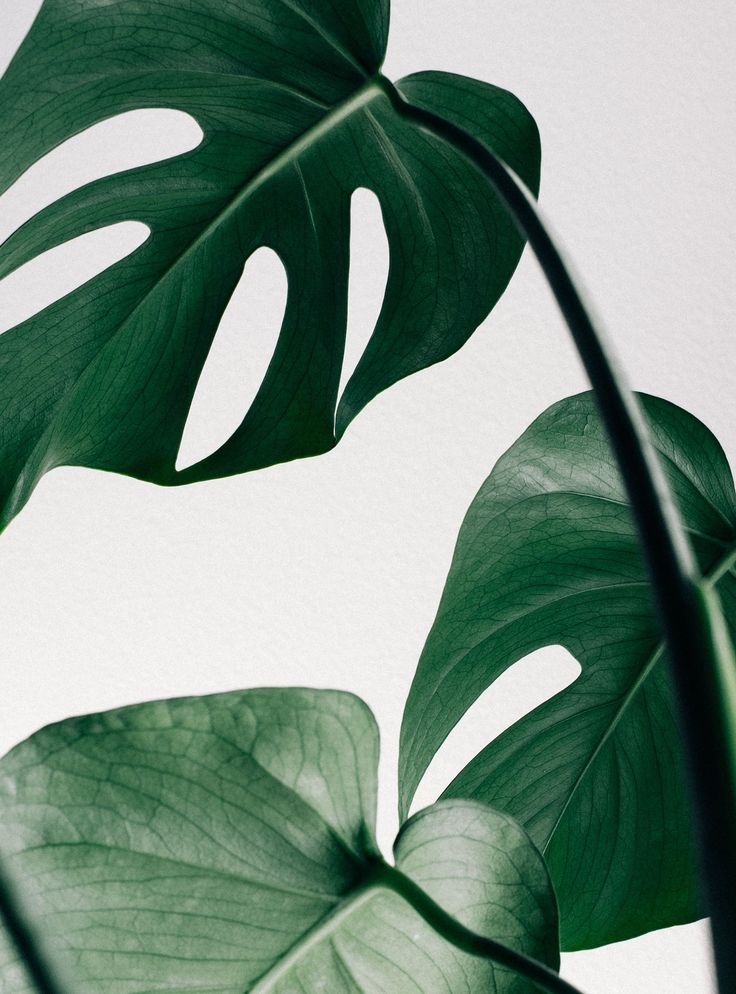 Diese 7 Pflanzen braucht jeder in seinem Zuhause – das Beste: Sie sind unkaputtbar!  #refinery29  http://www.refinery29.de/pflanzen-fuer-zuhause-die-nicht-sterben#slide-7  Chinesischer Geldbaum (Pilea peperomioides) Keine Frage: Die Blätter des Chinesischen Geldbaums sind mit Abstand die Coolsten vom Fest – und damit ist er unser Favorit! Kein Wunder, dass er vor allem bei Pinterest und Instagram so beliebt ist. Wenn man von Sukkulenten mittlerweile die Schnauze voll hat, sollte man es mal…