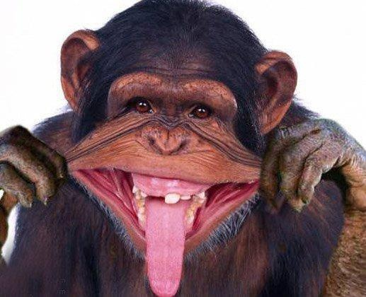 funny monkey, looks like my brother:)~