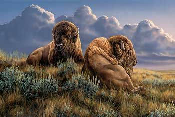 The Old Timers-Bison by Rosemary Millette|WildWings