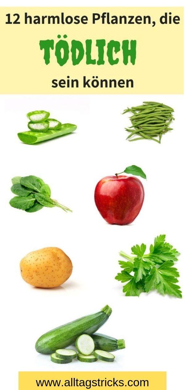 Diese Lebensmittel sind giftig, auch wenn sie harmlos erscheinen
