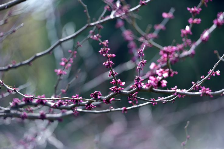 Beautiful Spring blossom...the pink with the turquoise background...this image eludes early morning freshness with a serenity.