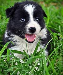 puppy!  too cute.