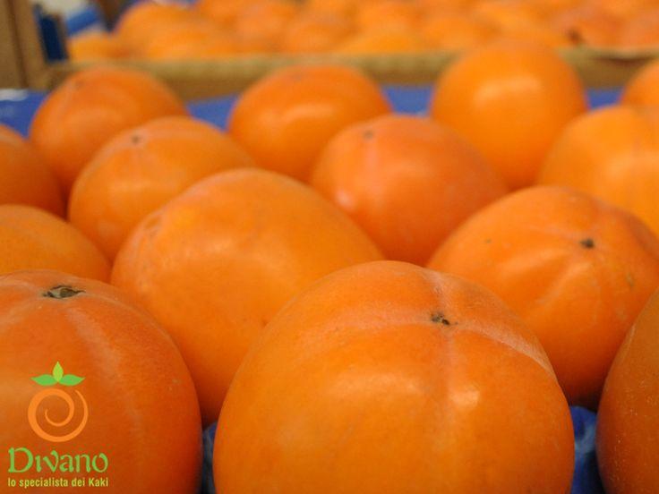 Our Rojo brillante persimmons. Info:www.divanosrl.it/en I nostri kaki rojo brillante. www.divanosrl.it #kakidivano #soledautunno