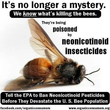 Beemageddon? As hysteria over honey bees recedes, anti-neonic narrative refocuses on wild bees
