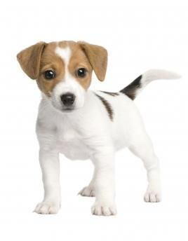 Dog Training, Dog Obedience Classes, Puppy Training | Phoenix, AZ #DogObedienceTipsandAdvice