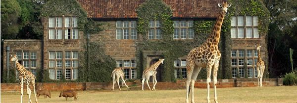 Giraffe Manor: Can you imagine anything more wonderful then a giraffe outside your door?