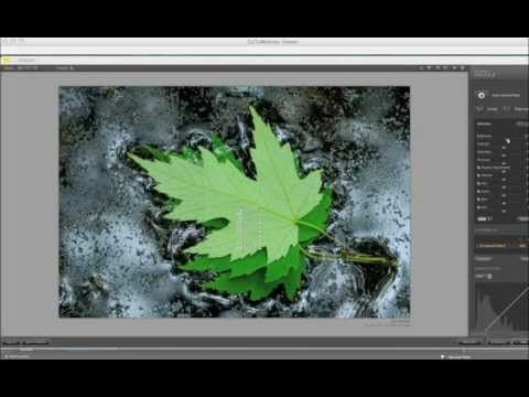 ▶ Mastering Macro Images with Nik Software & Photoshop Elements by Mike Moats - YouTube