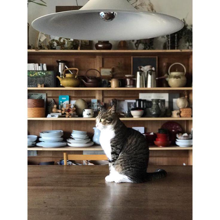 いいね!1,020件、コメント6件 ― 石井佳苗 Kanae Ishiiさん(@kanaeishii_lc)のInstagramアカウント: 「今日もシャチョーはいない。今年一番の大仕事らしい。頑張ってほしい。僕達のご飯のために。 . #猫シャインズ #猫社員ズ #ハナオ #イカ耳#cm撮影 #スタジオ入り6日目#本日スチール本番スタート」