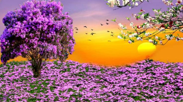 Spring HD Desktop Wallpaper | Free Spring Desktop Wallpapers ~ Toptenpack.com