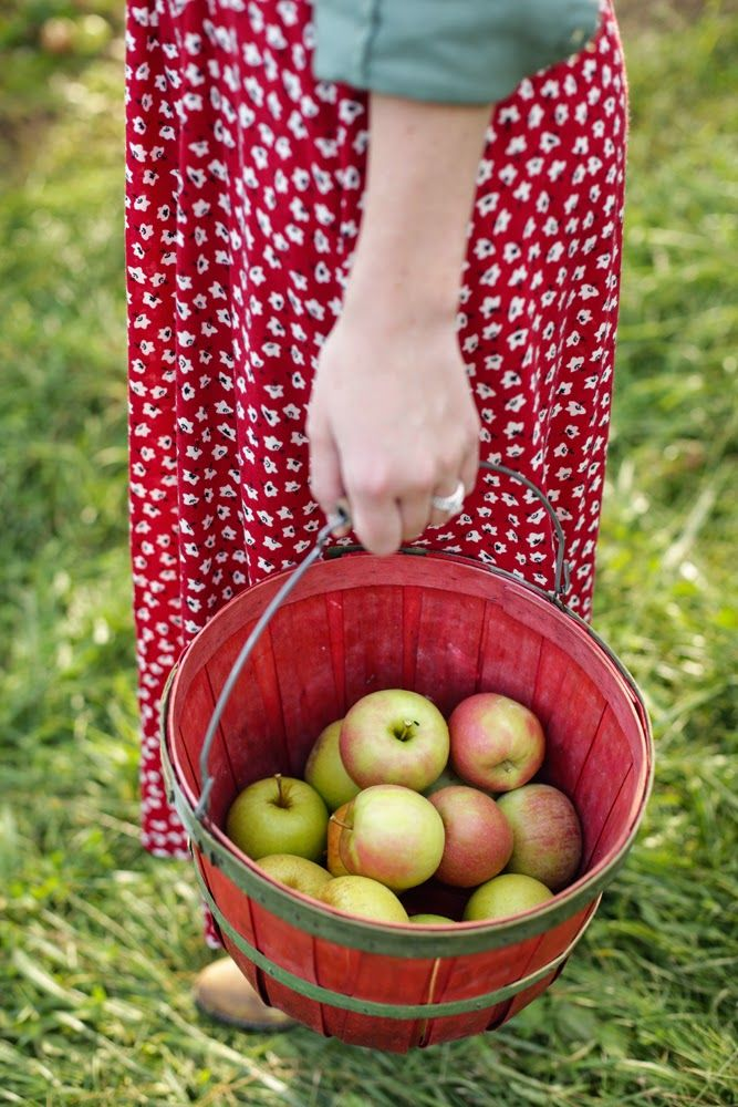 apple picking | katherine herndon photography