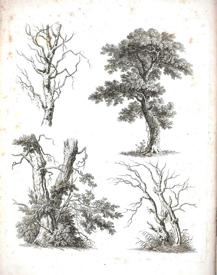 Botanical - Black and White - Tree sketches 6