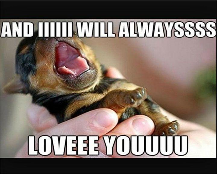 30 Hilarious Animal Memes