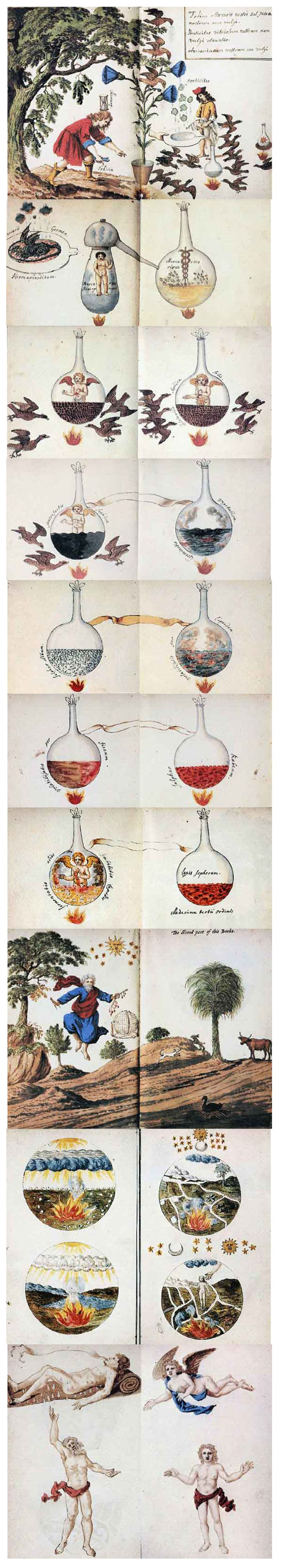 "Part 2: The alchemical processes of Transformation/Rebirth that ""treats of the change in human beings from blue-gold over black to white and rose: ""..there are ten bottles or retorts, each half filled with varicolored substances. These bottles can be so easily described that it is unnecessary to reproduce them. The first bottle (from the mouth of which issues a golden shrub with three blossoms) contains aBLUISH-GRAY liquid, the entire figure being called ""Our Quicksilver."" Under the vessel…"