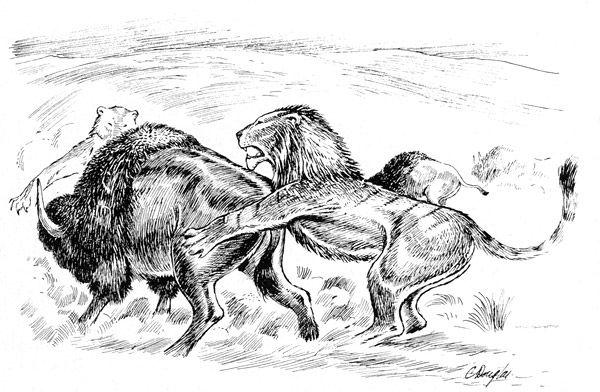 panthera_leo_atrox_El león americano, de nombre científico Panthera leo atrox, fue una subespecie del león actual