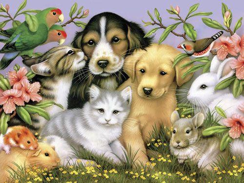 Állatok, akiket szeretünk