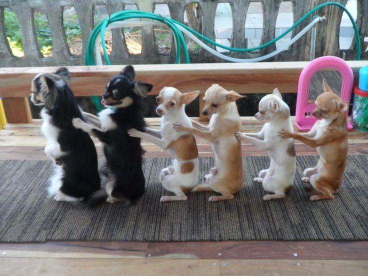 Border Collie Grabs a Lasso and Line Dances With 'Cowboy ... |Dog Line Dance