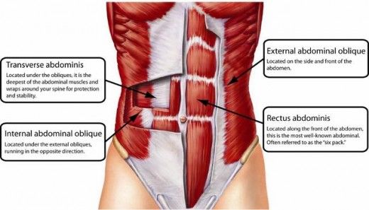"Really useful info on your t-abs. How to strengthen your internal abdomen muscles in order to slim your mid section. Transverse abdominis is the body's natural corset. Without it being strong, you will have a""beer gut""."