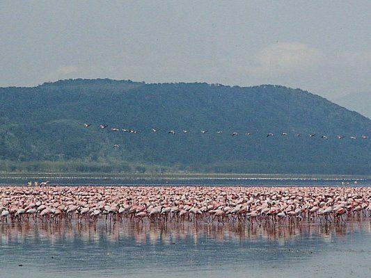 Озеро Виктория. Танзания, Кения, Уганда. Восточная Африка